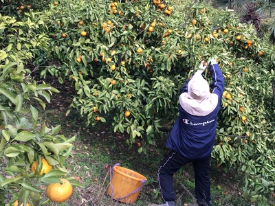 収穫.JPG