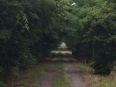 緑のトンネル.jpg