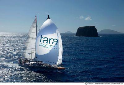 tara-f.jpg